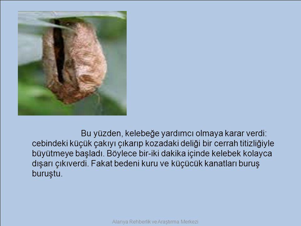 Bu yüzden, kelebeğe yardımcı olmaya karar verdi: cebindeki küçük çakıyı çıkarıp kozadaki deliği bir cerrah titizliğiyle büyütmeye başladı. Böylece bir
