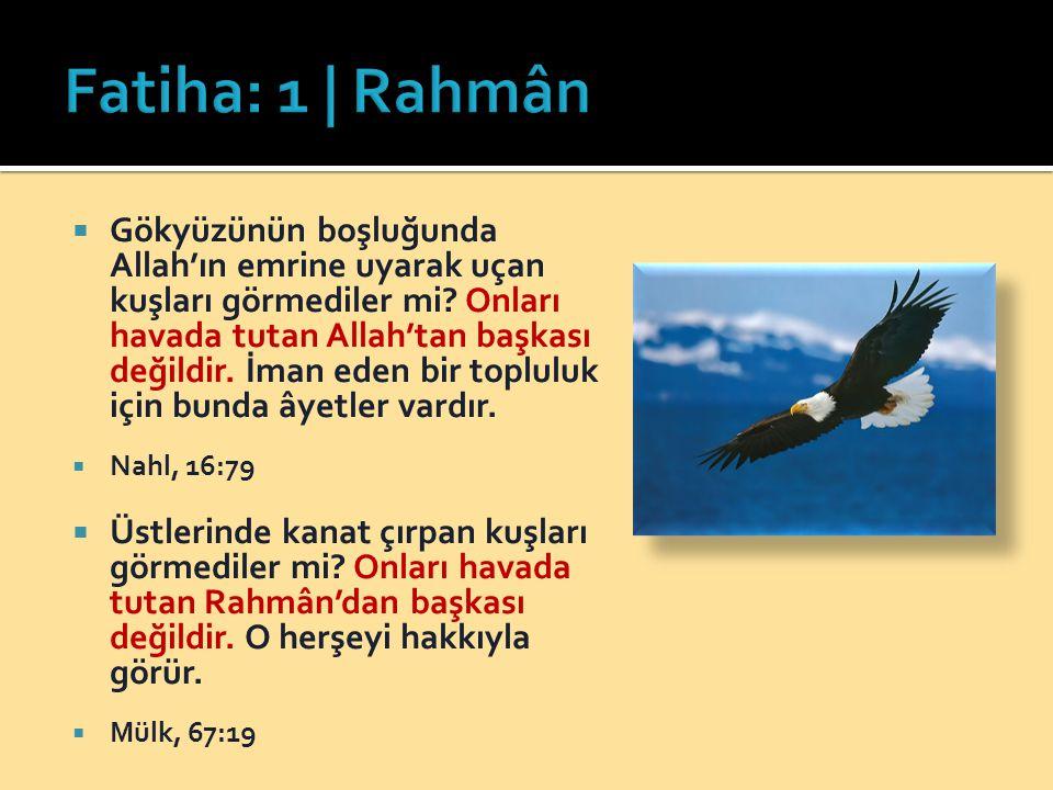 Gökyüzünün boşluğunda Allah'ın emrine uyarak uçan kuşları görmediler mi? Onları havada tutan Allah'tan başkası değildir. İman eden bir topluluk için
