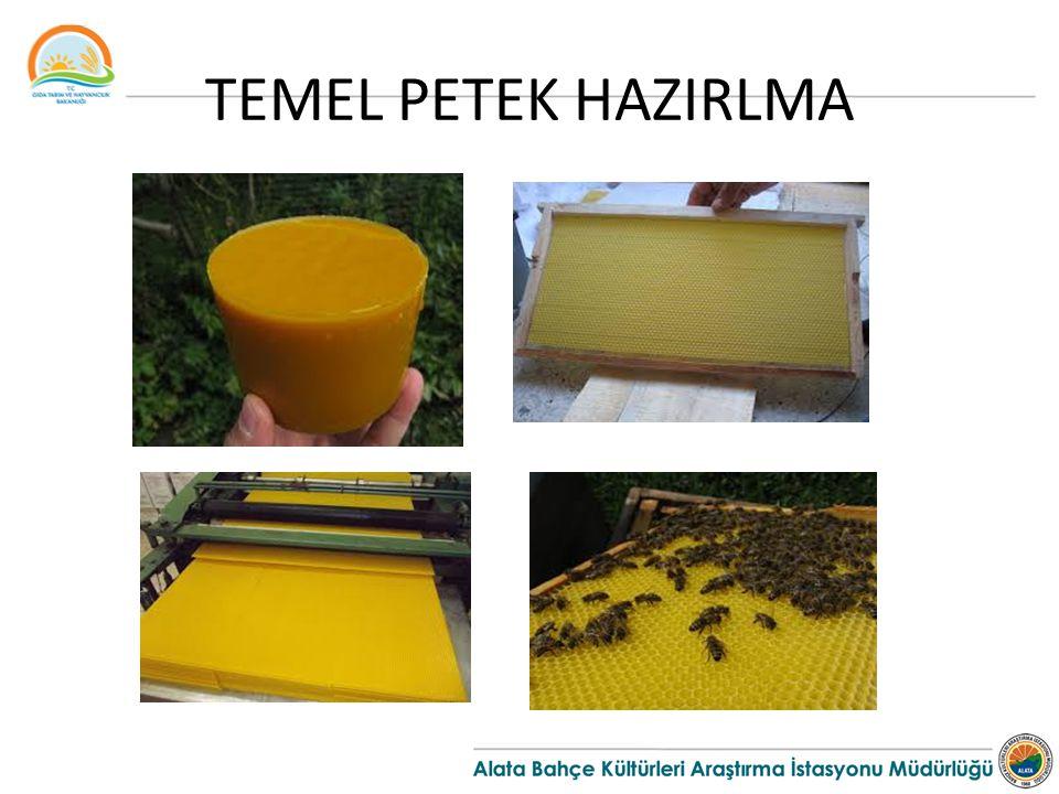 TEMEL PETEK HAZIRLMA
