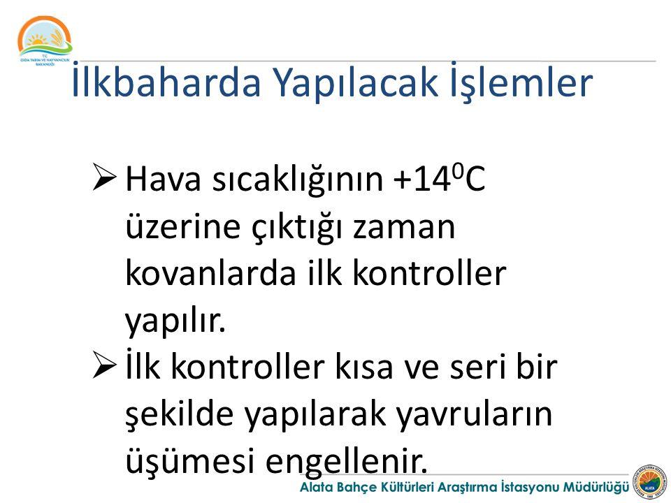 İlkbaharda Yapılacak İşlemler  Hava sıcaklığının +14 0 C üzerine çıktığı zaman kovanlarda ilk kontroller yapılır.