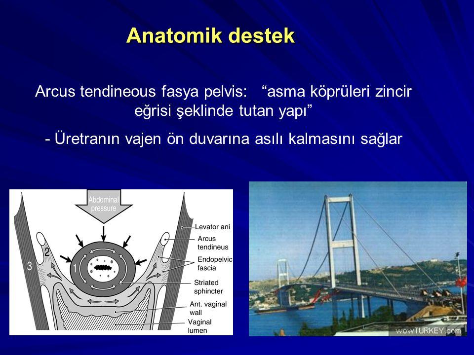 Anatomik destek Arcus tendineous fasya pelvis: asma köprüleri zincir eğrisi şeklinde tutan yapı - Üretranın vajen ön duvarına asılı kalmasını sağlar
