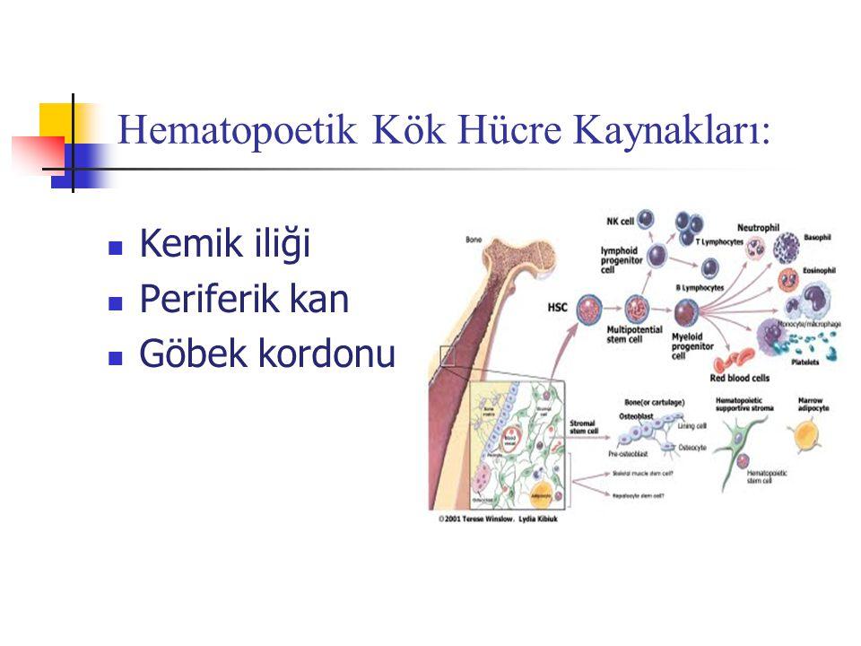 Hematopoetik Kök Hücre Kaynakları: Kemik iliği Periferik kan Göbek kordonu