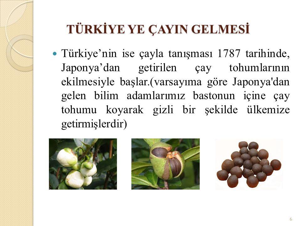 TÜRKİYE YE ÇAYIN GELMESİ Türkiye'nin ise çayla tanışması 1787 tarihinde, Japonya'dan getirilen çay tohumlarının ekilmesiyle başlar.(varsayıma göre Japonya dan gelen bilim adamlarımız bastonun içine çay tohumu koyarak gizli bir şekilde ülkemize getirmişlerdir) 6