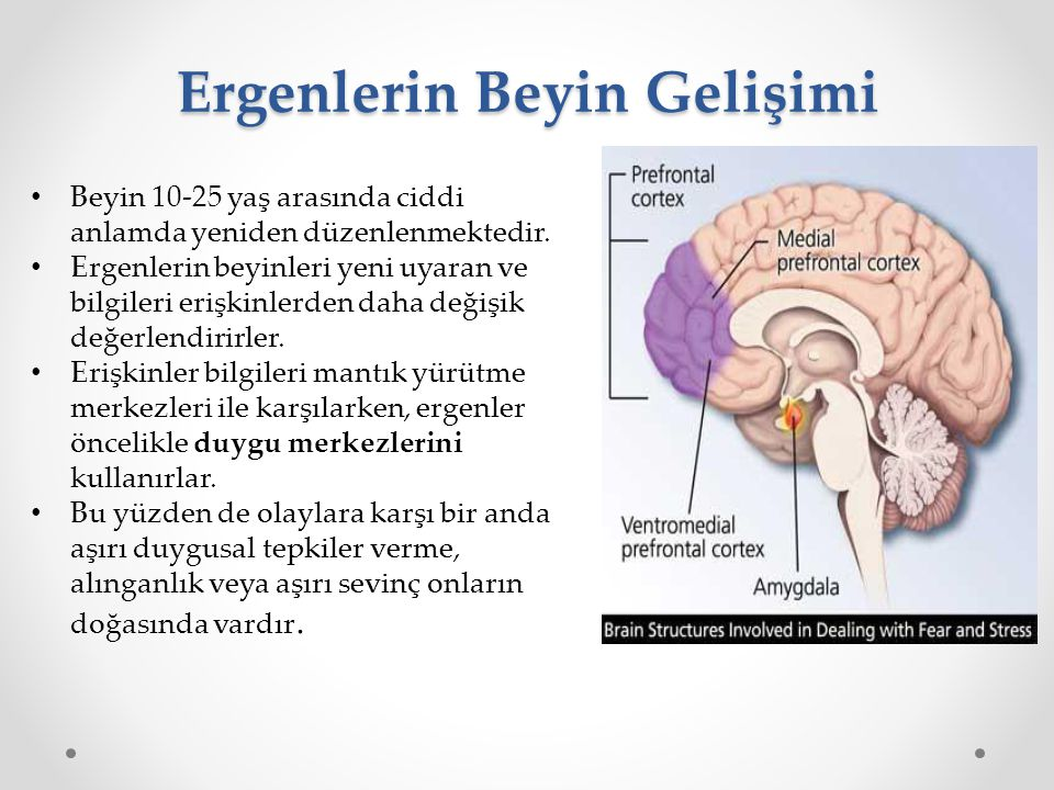Ergenlerin Beyin Gelişimi Beyin 10-25 yaş arasında ciddi anlamda yeniden düzenlenmektedir. Ergenlerin beyinleri yeni uyaran ve bilgileri erişkinlerden