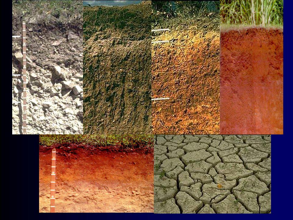 Toprak Kolloidleri l Toprağın kimyasal, fiziksel ve fiziko- kimyasal yönden en etkin ve en önemli yapı maddeleri mineral ve organik kolloidlerdir.