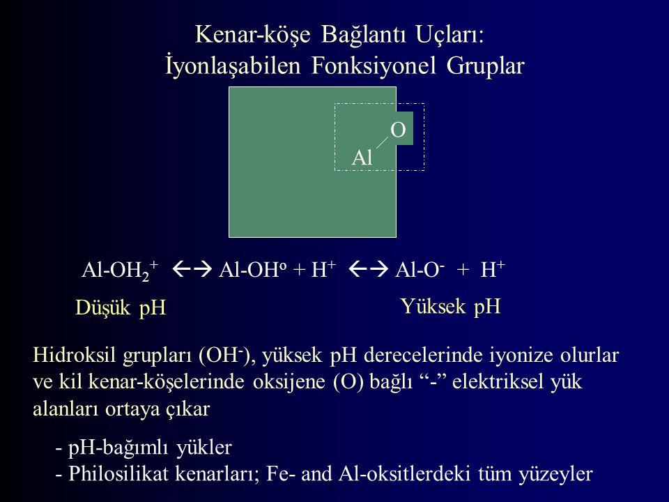 Kenar-köşe Bağlantı Uçları: İyonlaşabilen Fonksiyonel Gruplar Al-OH 2 +  Al-OH o + H +  Al-O - + H + Al O Yüksek pH Düşük pH - pH-bağımlı yükler - Philosilikat kenarları; Fe- and Al-oksitlerdeki tüm yüzeyler Hidroksil grupları (OH - ), yüksek pH derecelerinde iyonize olurlar ve kil kenar-köşelerinde oksijene (O) bağlı - elektriksel yük alanları ortaya çıkar