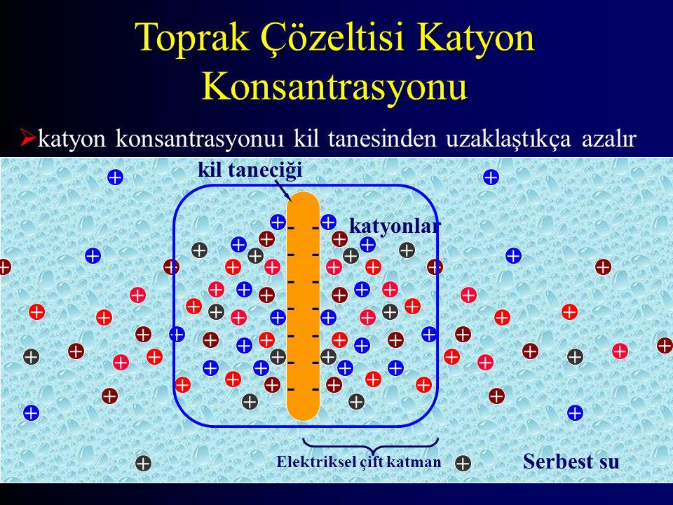 Toprak Çözeltisi Katyon Konsantrasyonu  katyon konsantrasyonuı kil tanesinden uzaklaştıkça azalır + ++ + + + + + + + + + + + + + + + + + + + + + + + + + + + + + + + + + + + + + + + + ++ + + + + + + + + + + + + + + + + + + + + + + + + + + + + + + + + + + + + + katyonlar - - - - - - - kil taneciği Elektriksel çift katman Serbest su