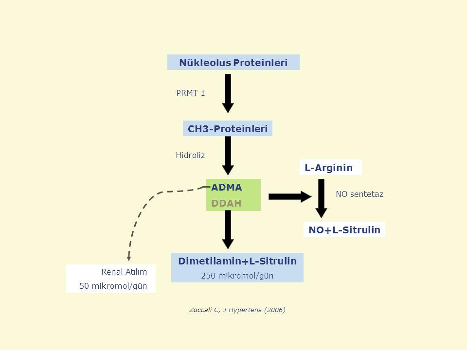 Nükleolus Proteinleri Dimetilamin+L-Sitrulin 250 mikromol/gün ADMA DDAH CH3-Proteinleri NO+L-Sitrulin L-Arginin PRMT 1 Hidroliz NO sentetaz Renal Atıl
