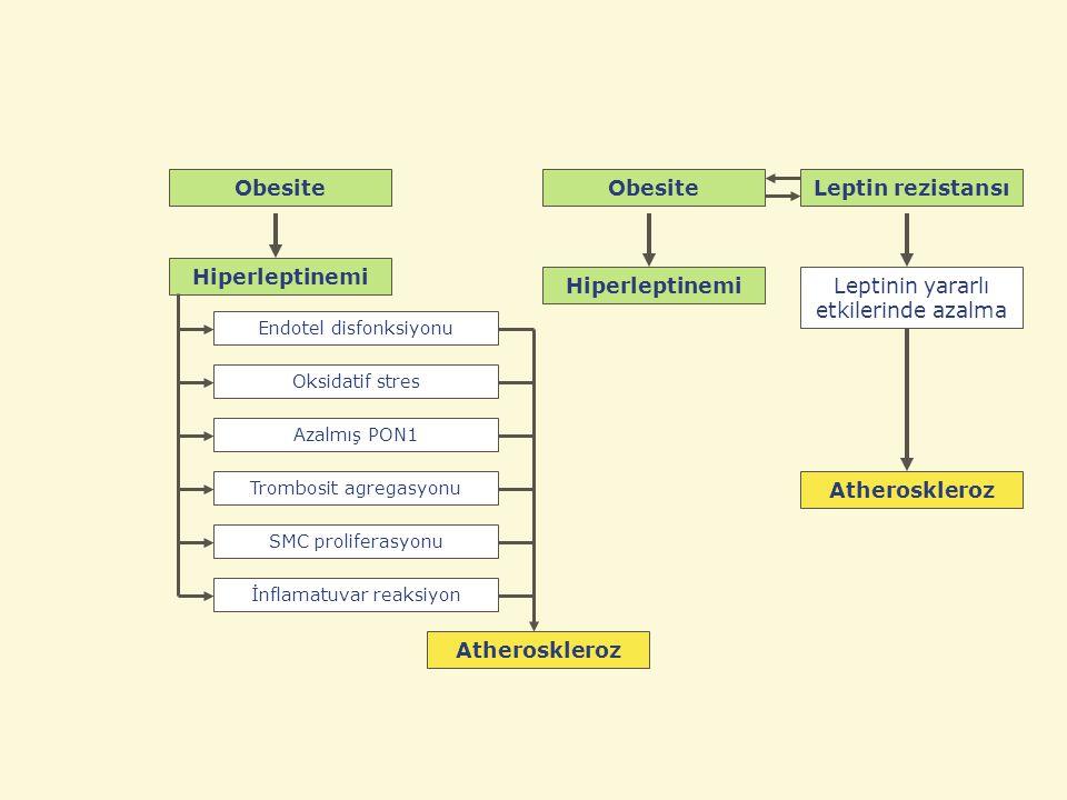 Hiperleptinemi Atheroskleroz Obesite Atheroskleroz Leptinin yararlı etkilerinde azalma Hiperleptinemi Leptin rezistansıObesite İnflamatuvar reaksiyon