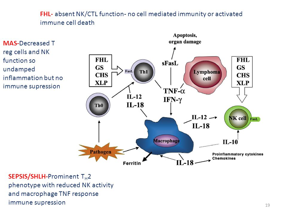 FHL- absent NK/CTL function- no cell mediated immunity or activated immune cell death MAS-Decreased T reg cells and NK function so undamped inflammation but no immune supression SEPSIS/SHLH-Prominent T H 2 phenotype with reduced NK activity and macrophage TNF response immune supression 19
