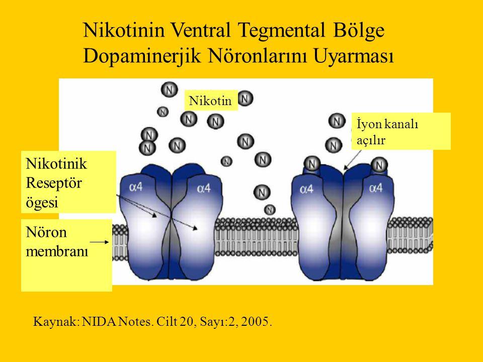 Nikotinin Ventral Tegmental Bölge Dopaminerjik Nöronlarını Uyarması Nikotinik Reseptör ögesi Nöron membranı Nikotin İyon kanalı açılır Kaynak: NIDA Notes.