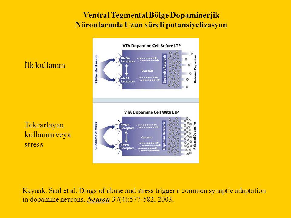 Ventral Tegmental Bölge Dopaminerjik Nöronlarında Uzun süreli potansiyelizasyon İlk kullanım Tekrarlayan kullanım veya stress Kaynak: Saal et al.
