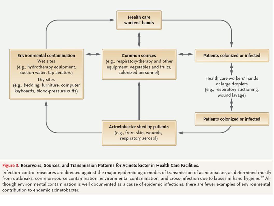 Tarama Sonrası Acinetobacter baumannii Saptanma Oranları