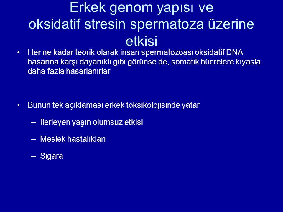 Erkek genom yapısı ve oksidatif stresin spermatoza üzerine etkisi Her ne kadar teorik olarak insan spermatozoası oksidatif DNA hasarına karşı dayanıkl