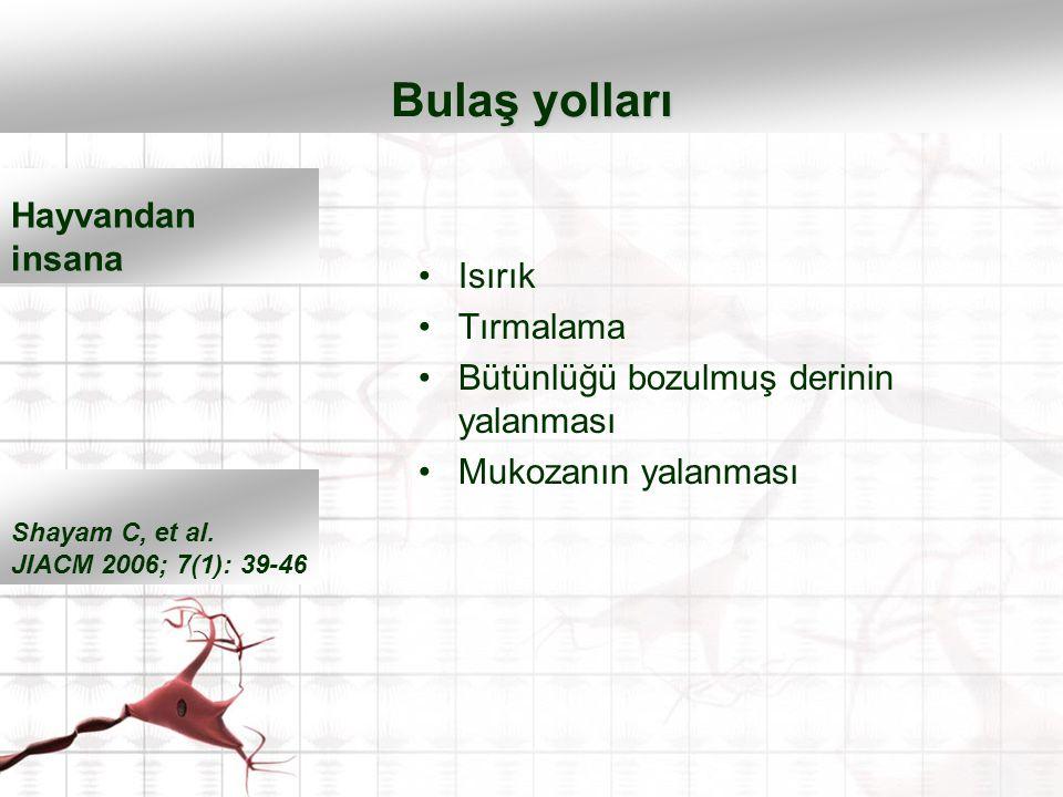 Isırık Tırmalama Bütünlüğü bozulmuş derinin yalanması Mukozanın yalanması Bulaş yolları Shayam C, et al. JIACM 2006; 7(1): 39-46 Hayvandan insana