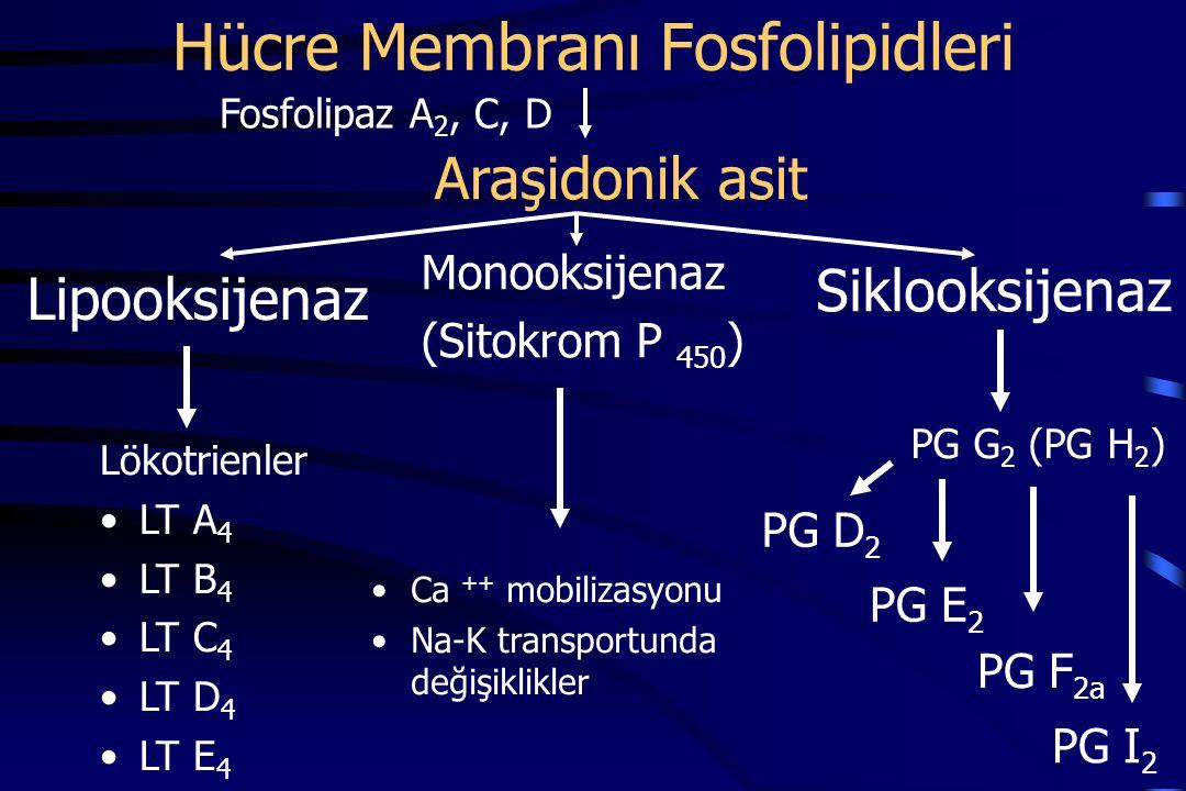 PG G 2 (PG H 2 ) Hücre Membranı Fosfolipidleri Lökotrienler LT A 4 LT B 4 LT C 4 LT D 4 LT E 4 Fosfolipaz A 2, C, D Araşidonik asit Lipooksijenaz Siklooksijenaz PG D 2 PG F 2a PG E 2 PG I 2 Monooksijenaz (Sitokrom P 450 ) Ca ++ mobilizasyonu Na-K transportunda değişiklikler