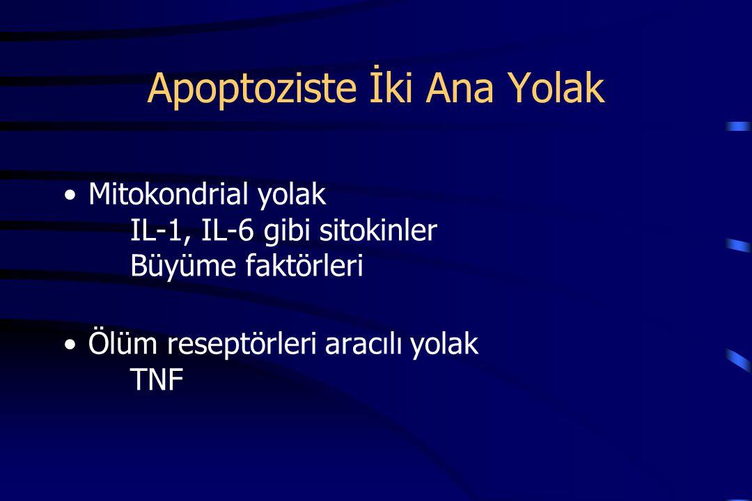 Apoptoziste İki Ana Yolak Mitokondrial yolak IL-1, IL-6 gibi sitokinler Büyüme faktörleri Ölüm reseptörleri aracılı yolak TNF