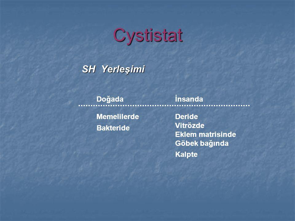Cystistat SH Yerleşimi Doğada Memelilerde Bakteride İnsanda Deride Vitrözde Eklem matrisinde Göbek bağında Kalpte