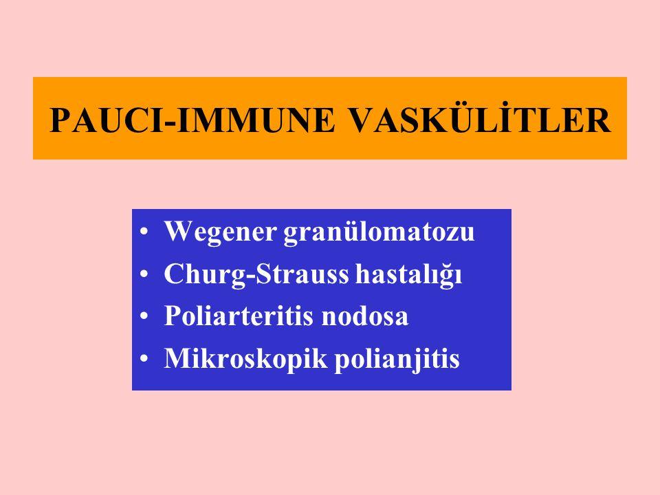 PAUCI-IMMUNE VASKÜLİTLER Wegener granülomatozu Churg-Strauss hastalığı Poliarteritis nodosa Mikroskopik polianjitis
