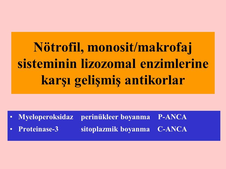 Nötrofil, monosit/makrofaj sisteminin lizozomal enzimlerine karşı gelişmiş antikorlar Myeloperoksidaz perinükleer boyanma P-ANCA Proteinase-3 sitoplaz
