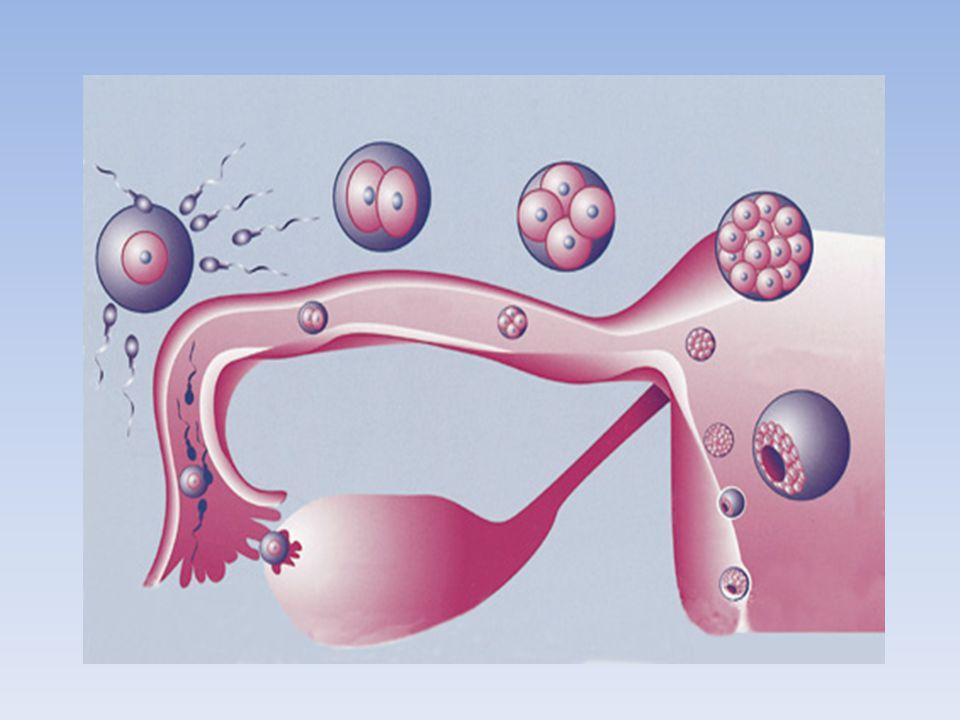 Ectopic pregnancy rates with day 3 versus day 5 embryo transfer (Milki AA & Jun SH.,2003 BMC Pregnancy Childbirth) - Retrospektif çalışma - 3.