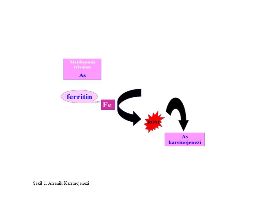 Şekil 1. Arsenik Karsinojenezi