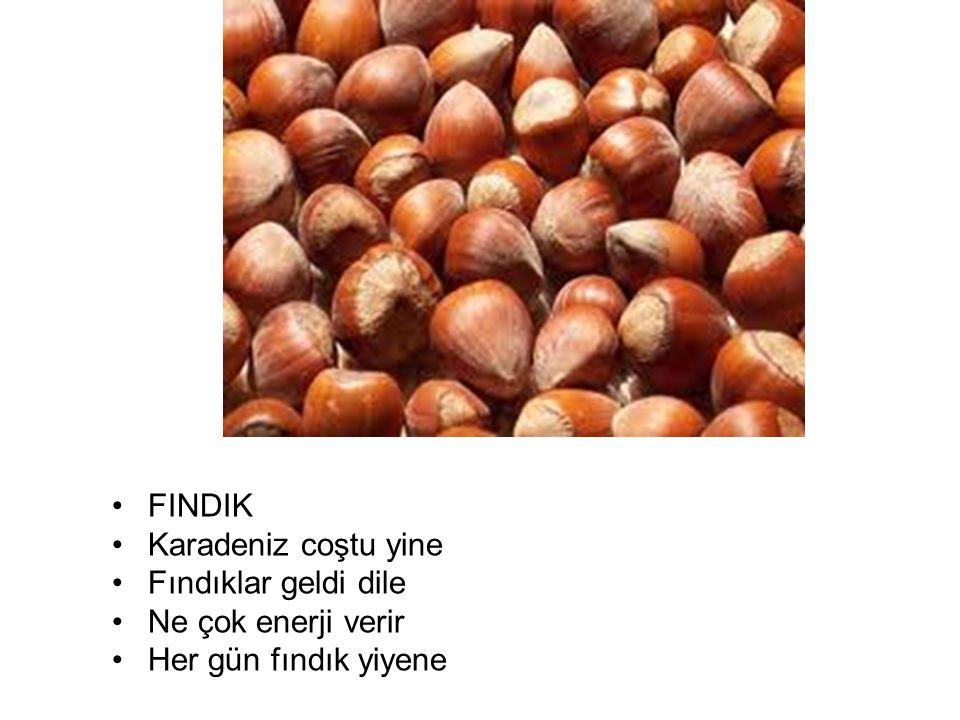 FINDIK Karadeniz coştu yine Fındıklar geldi dile Ne çok enerji verir Her gün fındık yiyene