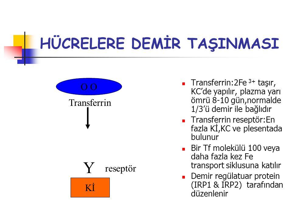 HÜCRELERE DEMİR TAŞINMASI Transferrin:2Fe 3+ taşır, KC'de yapılır, plazma yarı ömrü 8-10 gün,normalde 1/3'ü demir ile bağlıdır Transferrin reseptör:En