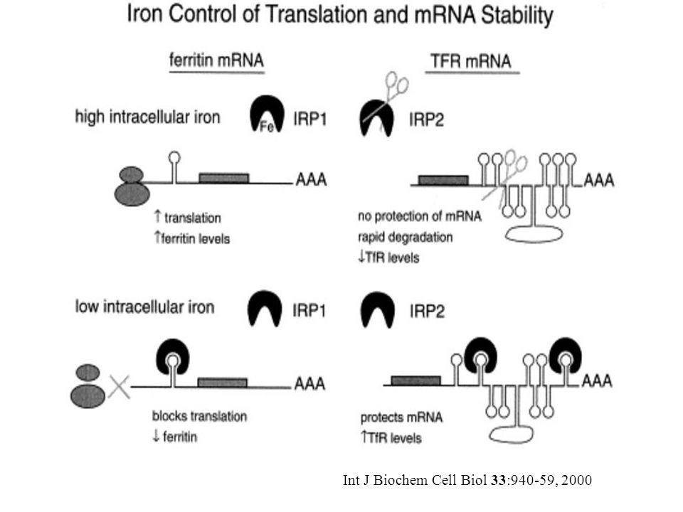 Int J Biochem Cell Biol 33:940-59, 2000