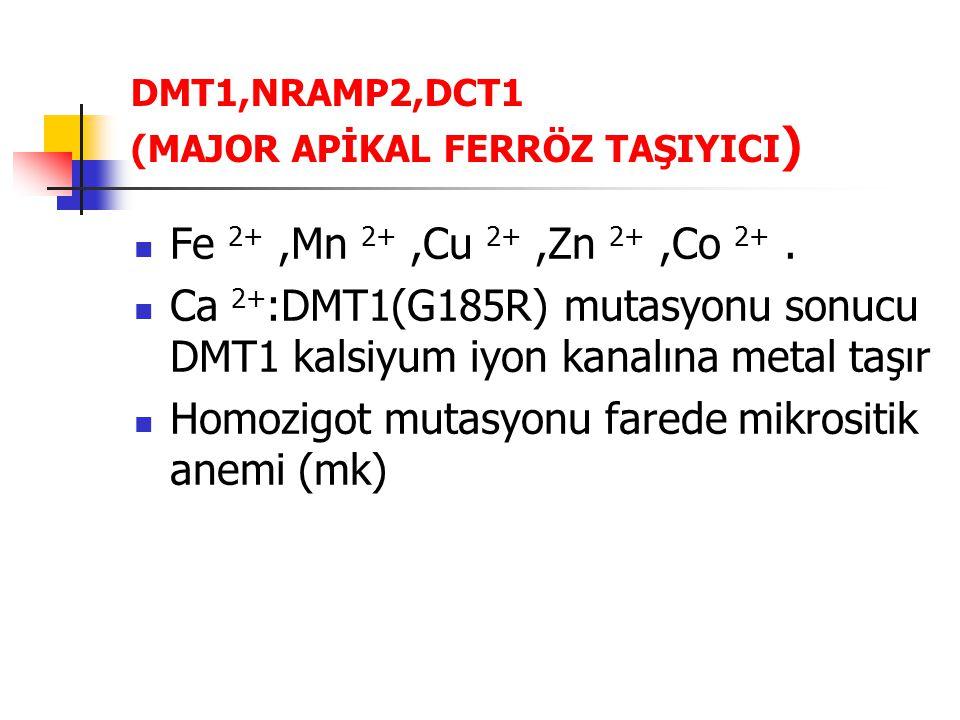 DMT1,NRAMP2,DCT1 (MAJOR APİKAL FERRÖZ TAŞIYICI ) Fe 2+,Mn 2+,Cu 2+,Zn 2+,Co 2+. Ca 2+ :DMT1(G185R) mutasyonu sonucu DMT1 kalsiyum iyon kanalına metal