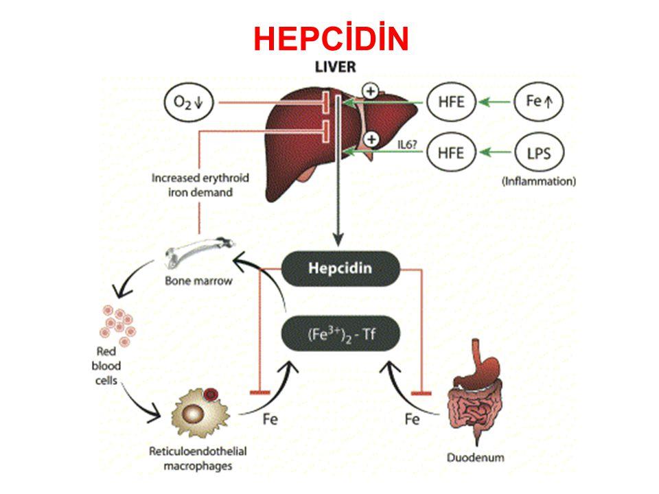 HEPCİDİN