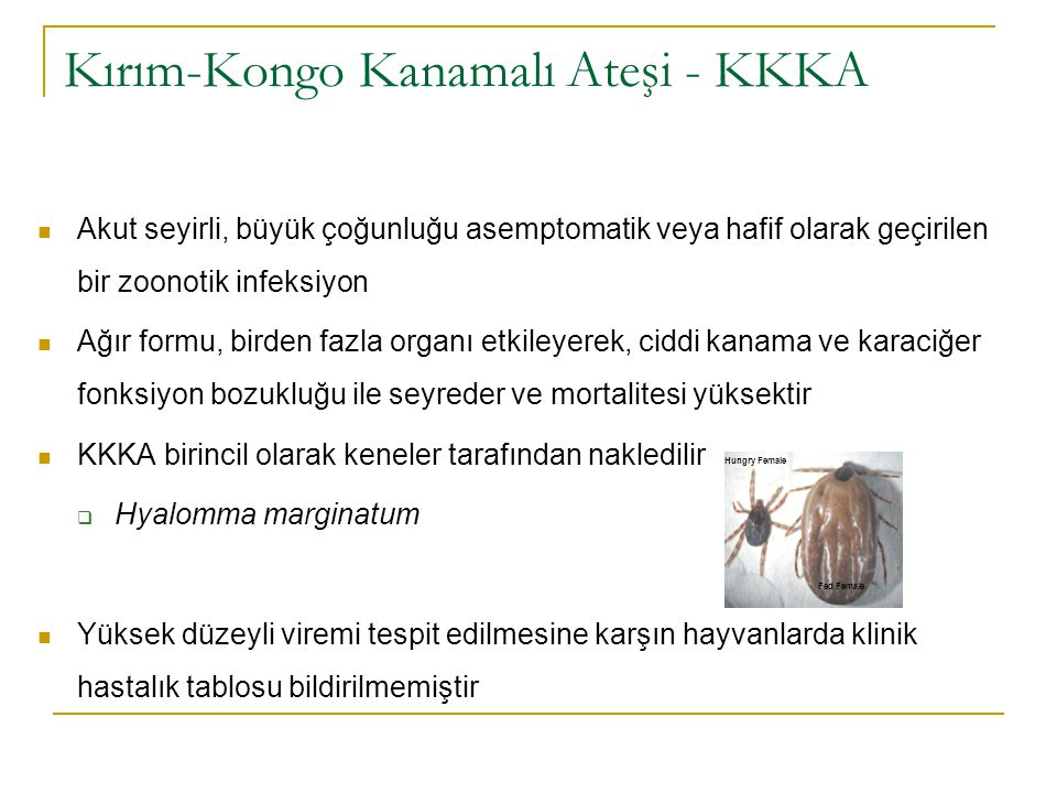 Kırım-Kongo Kanamalı Ateşi - KKKA Akut seyirli, büyük çoğunluğu asemptomatik veya hafif olarak geçirilen bir zoonotik infeksiyon Ağır formu, birden fazla organı etkileyerek, ciddi kanama ve karaciğer fonksiyon bozukluğu ile seyreder ve mortalitesi yüksektir KKKA birincil olarak keneler tarafından nakledilir  Hyalomma marginatum Yüksek düzeyli viremi tespit edilmesine karşın hayvanlarda klinik hastalık tablosu bildirilmemiştir Hungry Female Fed Female