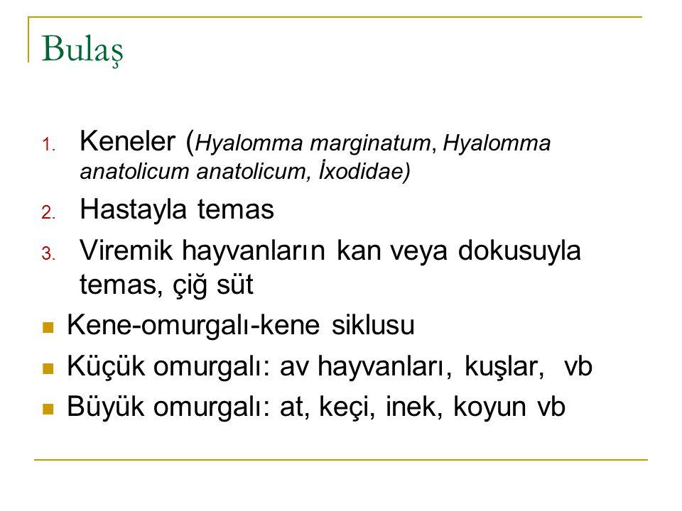 Bulaş 1.Keneler ( Hyalomma marginatum, Hyalomma anatolicum anatolicum, İxodidae) 2.
