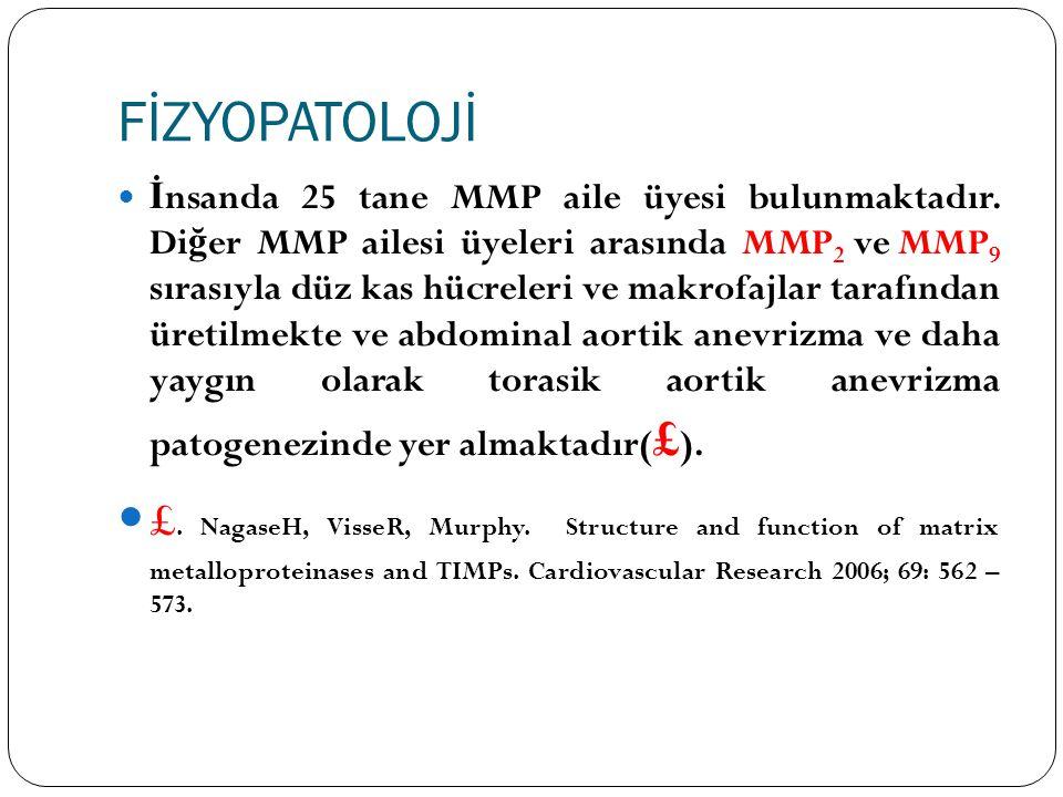 FİZYOPATOLOJİ İ nsanda 25 tane MMP aile üyesi bulunmaktadır. Di ğ er MMP ailesi üyeleri arasında MMP 2 ve MMP 9 sırasıyla düz kas hücreleri ve makrofa