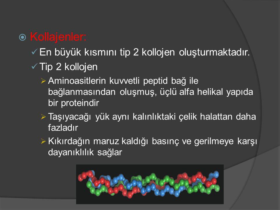  Kollajenler: En büyük kısmını tip 2 kollojen oluşturmaktadır. Tip 2 kollojen  Aminoasitlerin kuvvetli peptid bağ ile bağlanmasından oluşmuş, üçlü a
