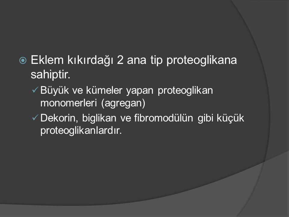  Eklem kıkırdağı 2 ana tip proteoglikana sahiptir. Büyük ve kümeler yapan proteoglikan monomerleri (agregan) Dekorin, biglikan ve fibromodülün gibi k