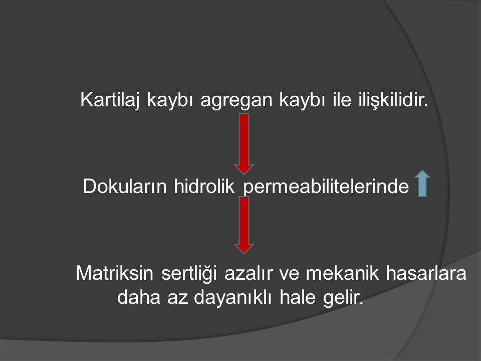 Kartilaj kaybı agregan kaybı ile ilişkilidir. Dokuların hidrolik permeabilitelerinde Matriksin sertliği azalır ve mekanik hasarlara daha az dayanıklı