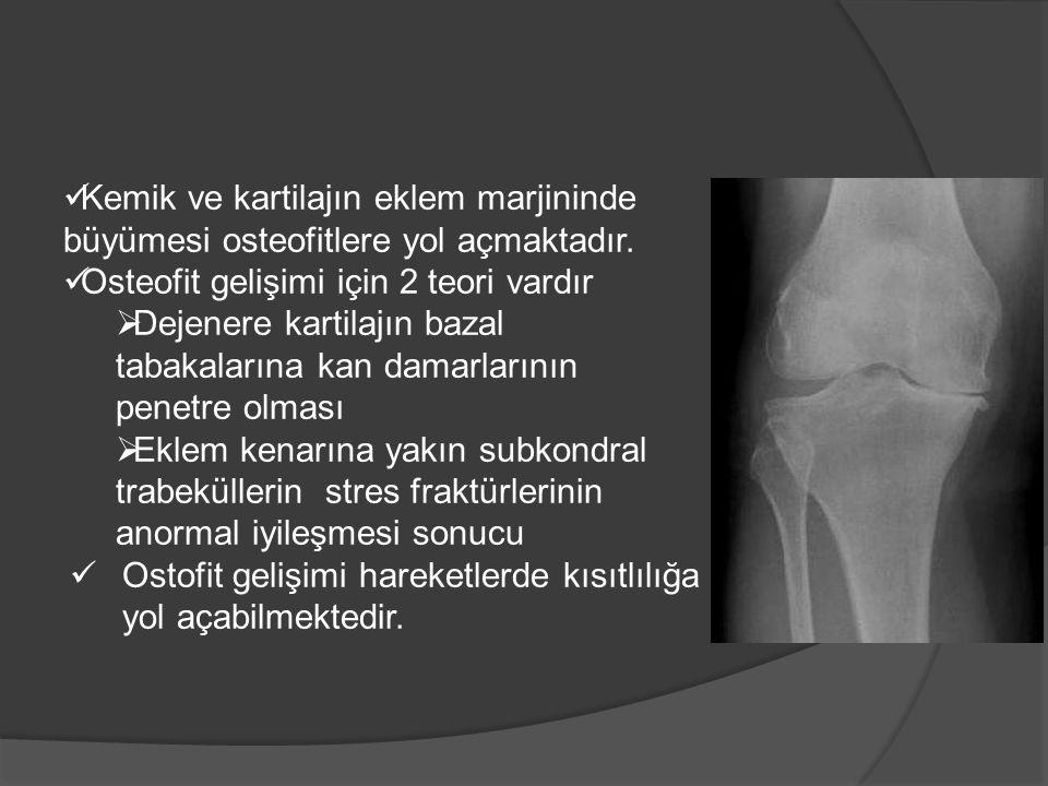 Kemik ve kartilajın eklem marjininde büyümesi osteofitlere yol açmaktadır. Osteofit gelişimi için 2 teori vardır  Dejenere kartilajın bazal tabakalar