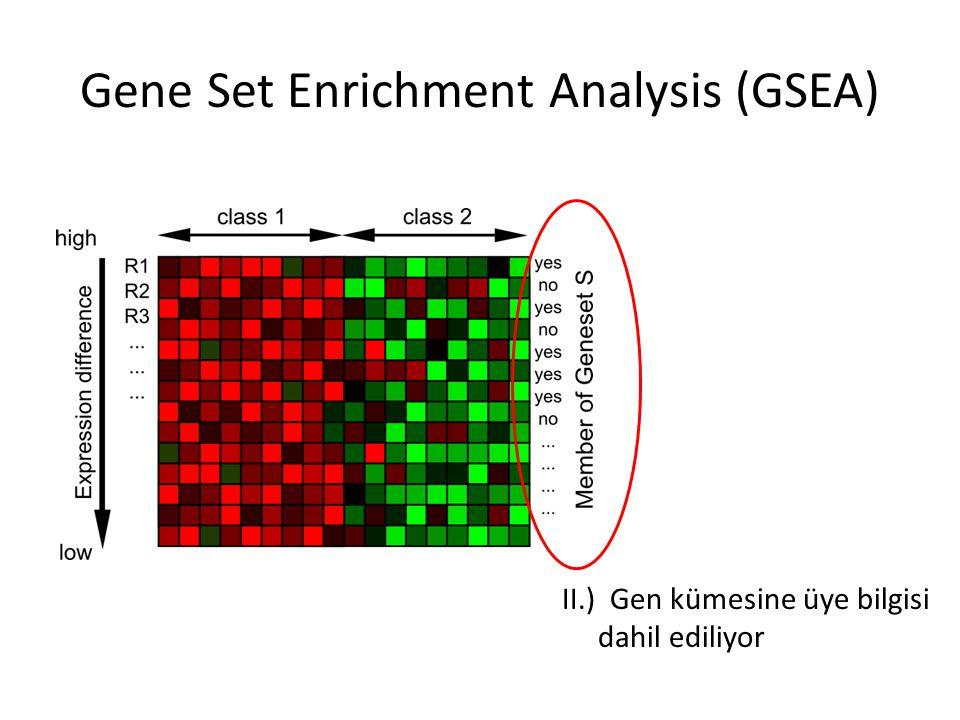 II.) Gen kümesine üye bilgisi dahil ediliyor