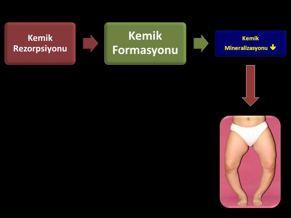 Kemik Rezorpsiyonu Kemik Formasyonu Kemik Mineralizasyonu 