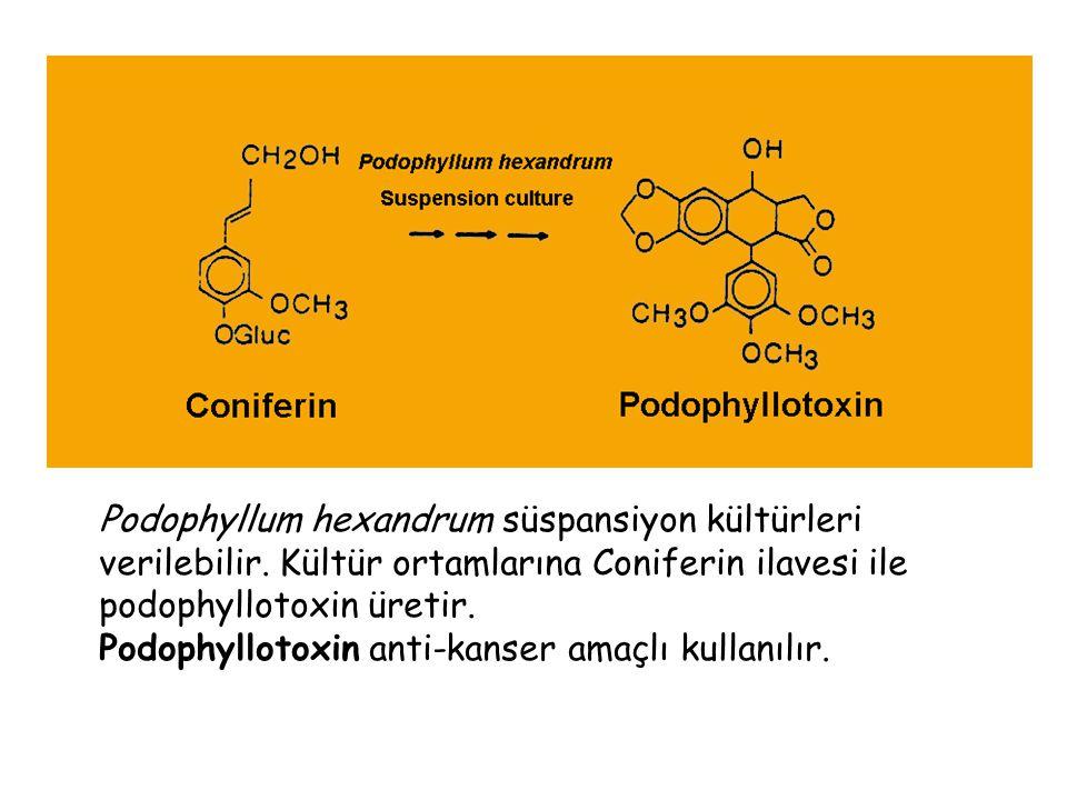 Podophyllum hexandrum süspansiyon kültürleri verilebilir.