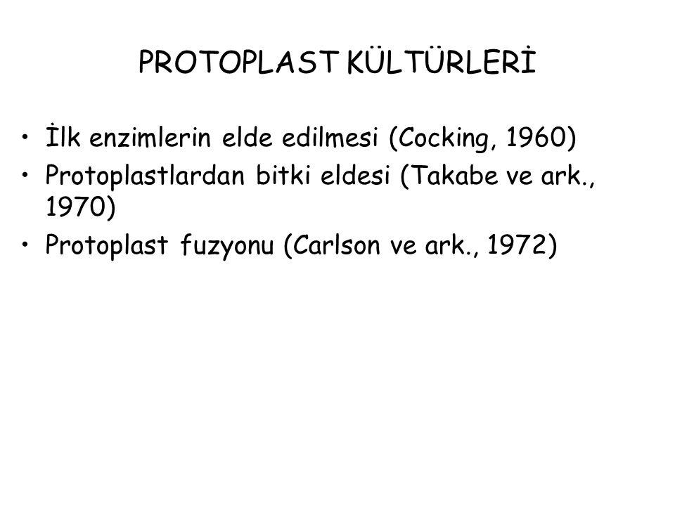 PROTOPLAST KÜLTÜRLERİ İlk enzimlerin elde edilmesi (Cocking, 1960) Protoplastlardan bitki eldesi (Takabe ve ark., 1970) Protoplast fuzyonu (Carlson ve ark., 1972)