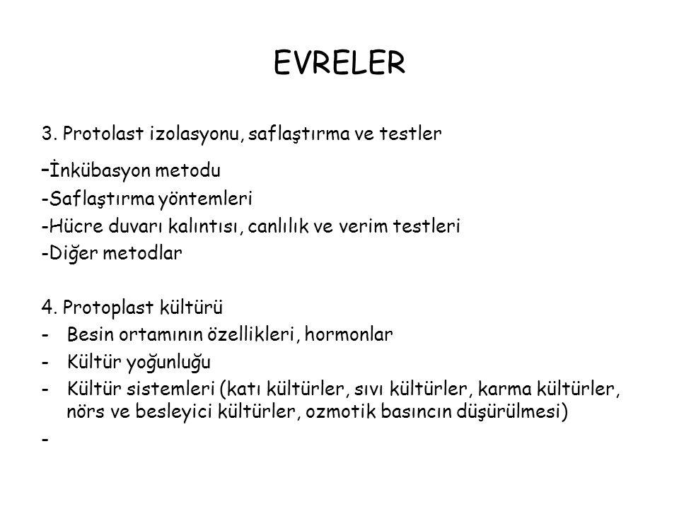 EVRELER 3.