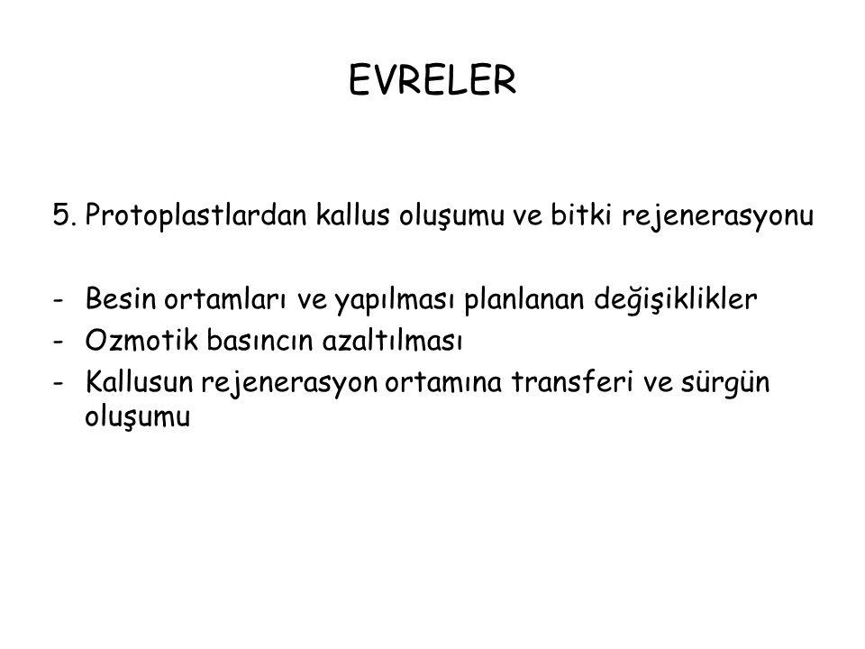 EVRELER 5.