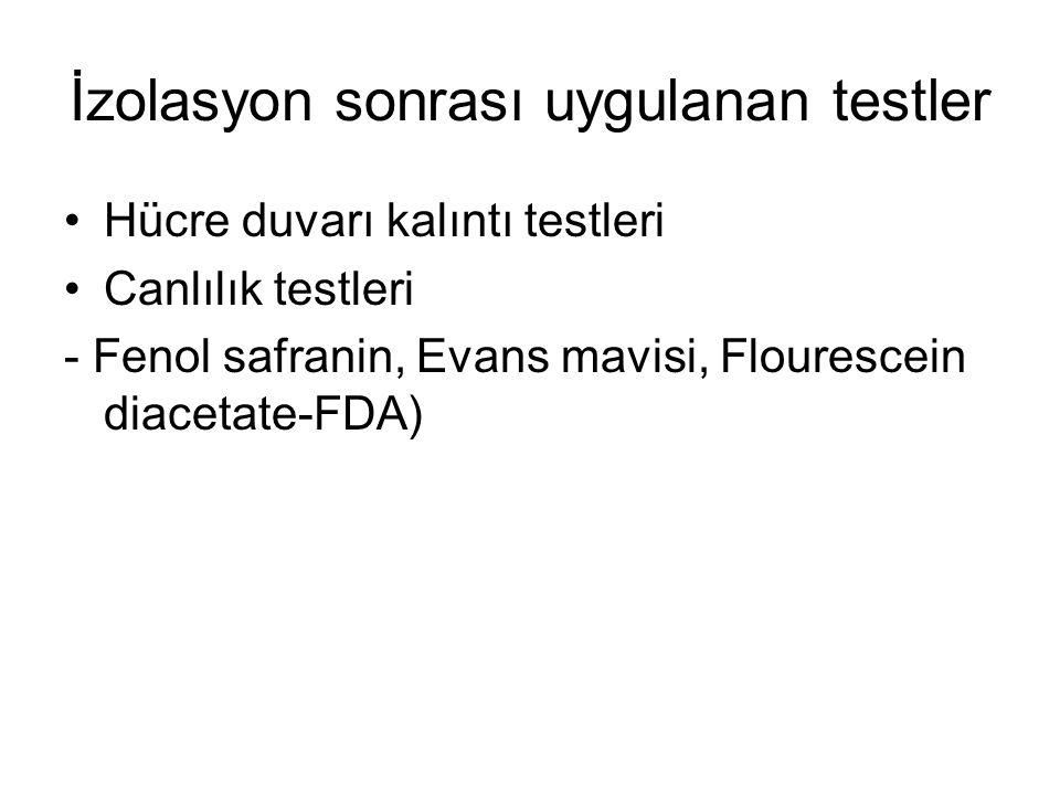 İzolasyon sonrası uygulanan testler Hücre duvarı kalıntı testleri Canlılık testleri - Fenol safranin, Evans mavisi, Flourescein diacetate-FDA)