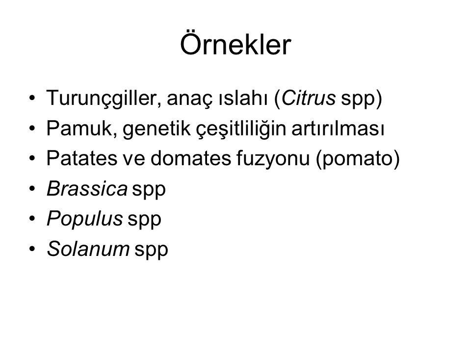 Örnekler Turunçgiller, anaç ıslahı (Citrus spp) Pamuk, genetik çeşitliliğin artırılması Patates ve domates fuzyonu (pomato) Brassica spp Populus spp Solanum spp