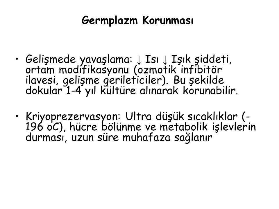 Germplazm Korunması Gelişmede yavaşlama: ↓ Isı ↓ Işık şiddeti, ortam modifikasyonu (ozmotik infibitör ilavesi, gelişme gerileticiler).