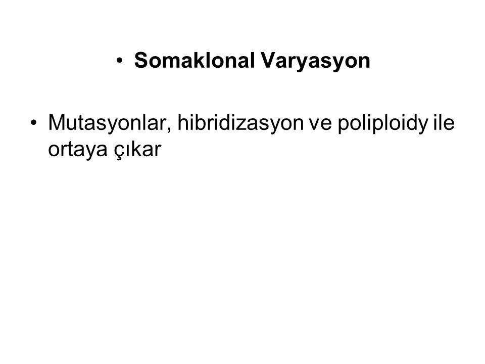 Somaklonal Varyasyon Mutasyonlar, hibridizasyon ve poliploidy ile ortaya çıkar