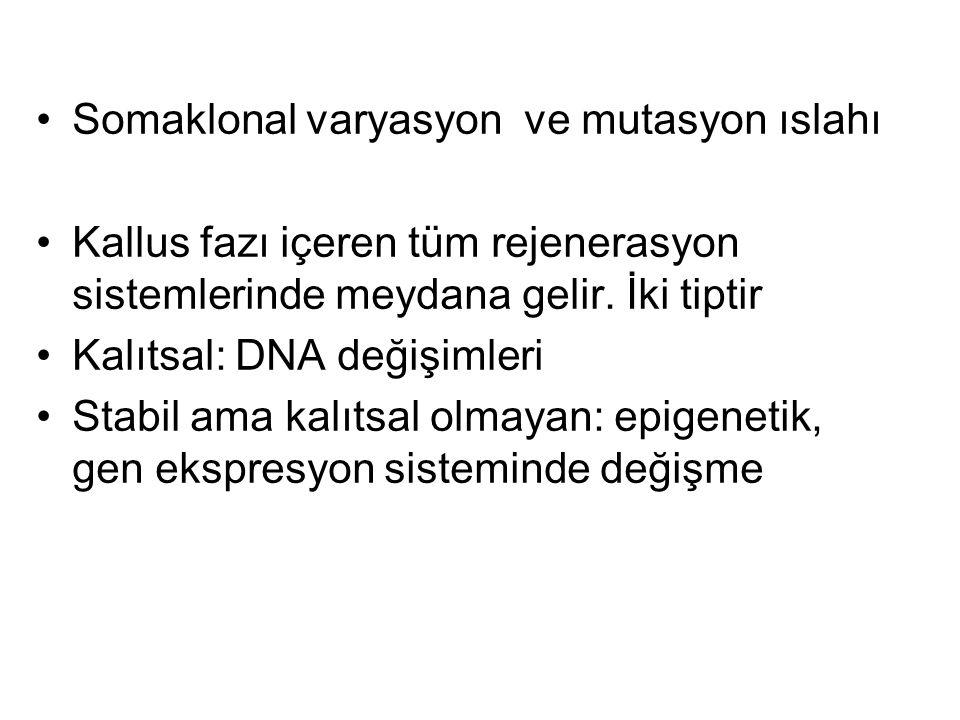 Somaklonal varyasyon ve mutasyon ıslahı Kallus fazı içeren tüm rejenerasyon sistemlerinde meydana gelir.