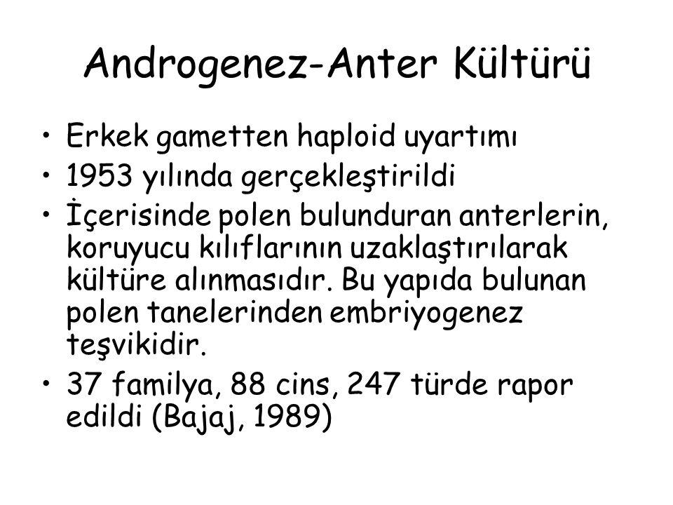 Androgenez-Anter Kültürü Erkek gametten haploid uyartımı 1953 yılında gerçekleştirildi İçerisinde polen bulunduran anterlerin, koruyucu kılıflarının uzaklaştırılarak kültüre alınmasıdır.